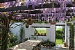This is a photo I made on 24th April last year in my own garden in Belgium. Here the star of Spring is the wisteria on the pergola. You can see more on my blog : http://a-little-bit-of-paradise.over-blog.com/ -